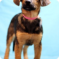 Adopt A Pet :: Bristol - Waldorf, MD