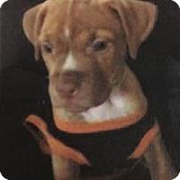 Adopt A Pet :: Prince - Gloucester, MA