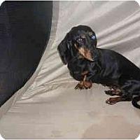 Adopt A Pet :: DELLA BELLA - SCOTTSDALE, AZ
