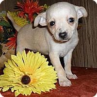 Adopt A Pet :: Sparkle - Chandlersville, OH