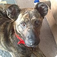 Adopt A Pet :: Olive - Toledo, OH