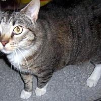 Adopt A Pet :: Murphy - NC - Liberty, NC