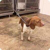 Adopt A Pet :: Bonnie - Upper Sandusky, OH