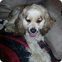 Adopt A Pet :: Ka lani - Ogden, UT
