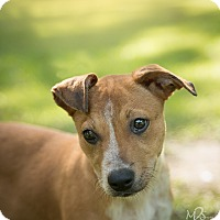 Adopt A Pet :: Piper - Daleville, AL