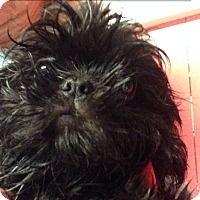 Adopt A Pet :: Huggy - Cumberland, MD