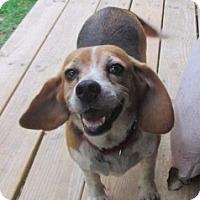 Adopt A Pet :: MILLIE - Brookside, NJ