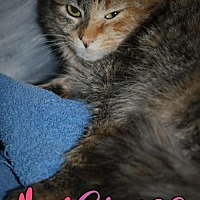 Calico Cat for adoption in Island Heights, New Jersey - Grace