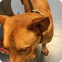 Adopt A Pet :: Oakley - Jupiter, FL