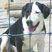 Adopt A Pet :: Spanky - Mexia, TX