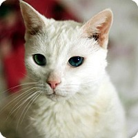 Adopt A Pet :: Snowflake 5 - New York, NY