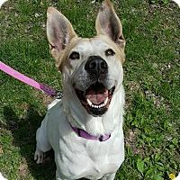 Adopt A Pet :: Esmeralda - East Hartford, CT