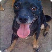 Adopt A Pet :: Monte - Fowler, CA