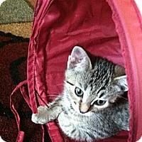Adopt A Pet :: Jack - Kirkwood, DE