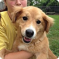 Adopt A Pet :: Marilyn - White River Junction, VT