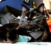 Adopt A Pet :: Bear - Vancouver, BC