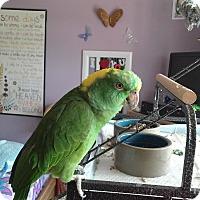 Adopt A Pet :: Xydeaco - Independence, KY