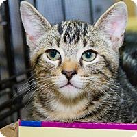 Adopt A Pet :: Sheldon - Irvine, CA