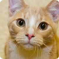 Adopt A Pet :: Follie - Irvine, CA