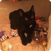 Adopt A Pet :: Sammy - Raritan, NJ