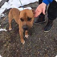 Adopt A Pet :: Mac - Cedaredge, CO