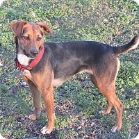 Adopt A Pet :: Dorothy - Pulaski, TN