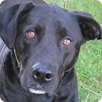 Adopt A Pet :: Haley - Huntsville, AL