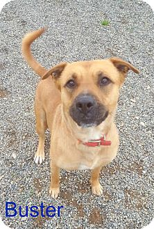 Shepherd (Unknown Type) Mix Dog for adoption in Yreka, California - Buster