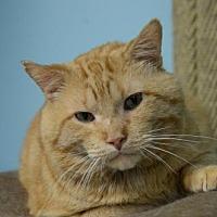 Adopt A Pet :: Flynn 170261 - Atlanta, GA