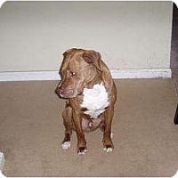 Adopt A Pet :: Billy- COURTESY LISTING - Killen, AL