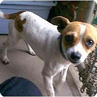 Adopt A Pet :: TOBY - dewey, AZ