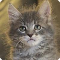 Adopt A Pet :: Gibson - Irvine, CA
