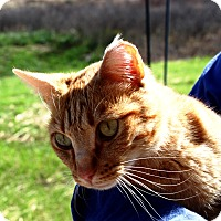 Adopt A Pet :: Blaze - Nolensville, TN