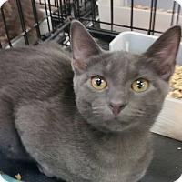 Adopt A Pet :: Tommy - Harrisburg, NC