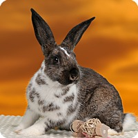 Adopt A Pet :: Rocket - Marietta, GA