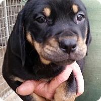 Adopt A Pet :: Pup - Gainesville, FL