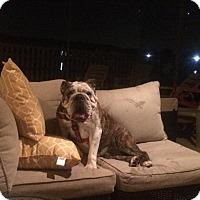 Adopt A Pet :: penny - Odessa, FL