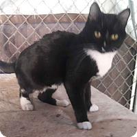 Adopt A Pet :: Missy - Alamo, CA