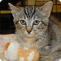 Adopt A Pet :: Shalalee - Whittier, CA