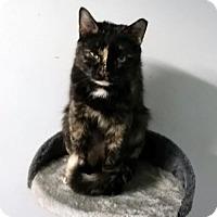Adopt A Pet :: Dahlia - Ridgewood, NY
