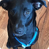 Adopt A Pet :: Mei - Active and Fun Loving Pup! - Seattle, WA