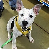 Adopt A Pet :: Finn - North Wilkesboro, NC