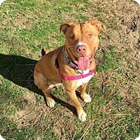 Adopt A Pet :: Diesel - Menands, NY