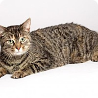 Adopt A Pet :: Scarlet - Kingston, ON
