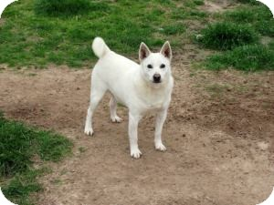 Terrier (Unknown Type, Small) Mix Dog for adoption in Quinlan, Texas - Chalky