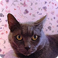 Adopt A Pet :: Lil Lucy - Albany, NY