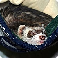 Adopt A Pet :: Heff - Acworth, GA