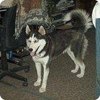 Adopt A Pet :: Azami - Alliance, NE