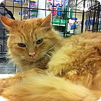 Adopt A Pet :: Baboo - Pittstown, NJ