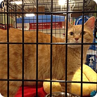 Adopt A Pet :: Katrina - Muncie, IN